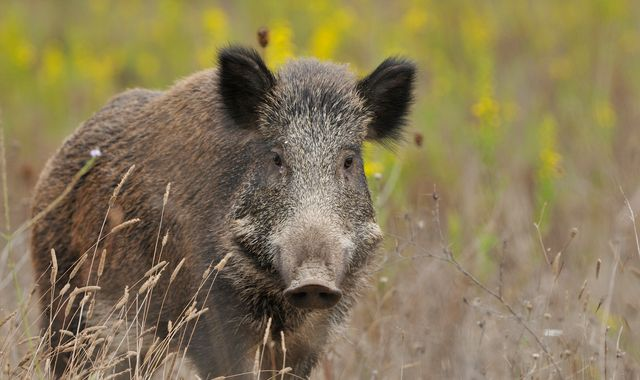 Man charged with manslaughter after shooting father dead on wild boar hunt