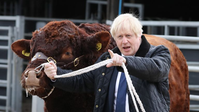 Boris Johnson walking a bull during a visit to Darnford Farm in Banchory near Aberdeen