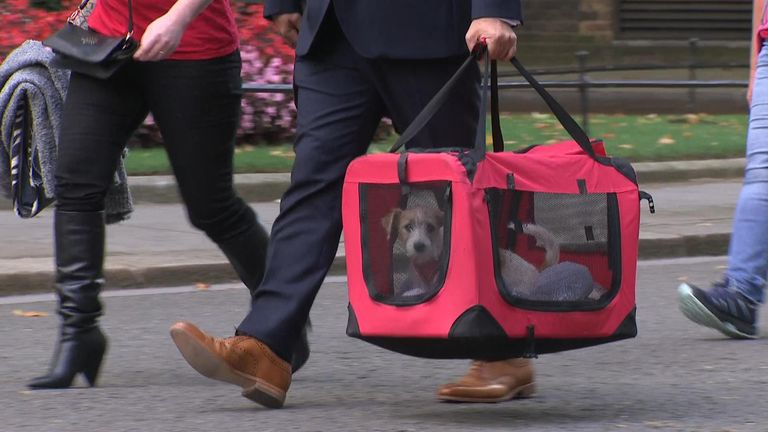 Boris Johnson's new dog arrives at Downing Street