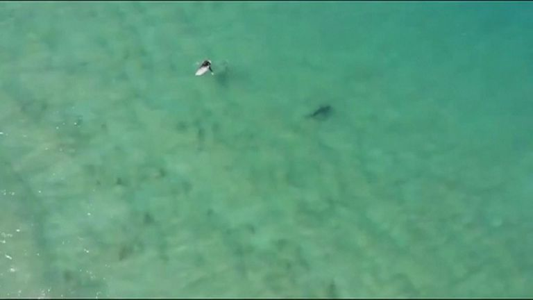 A drone equipped with infra-red thermal imaging camera and a warning speaker system captured a shark approaching a surfer