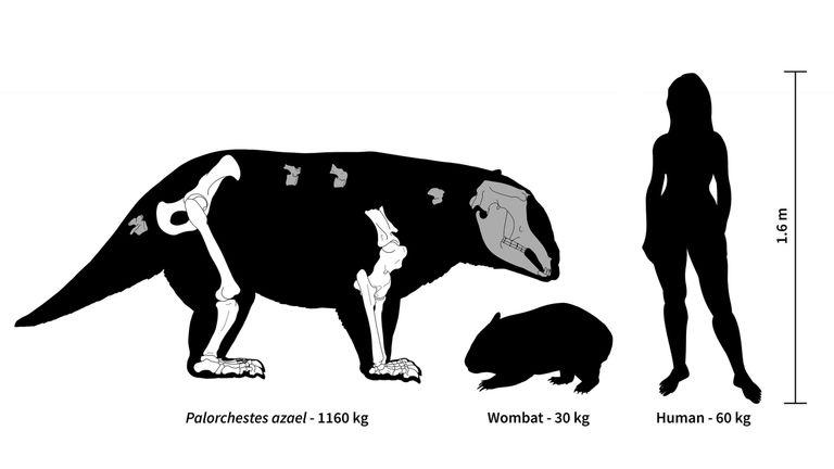 Ancient Australia was home to strange marsupial giants, some weighing over 1,000 kg.