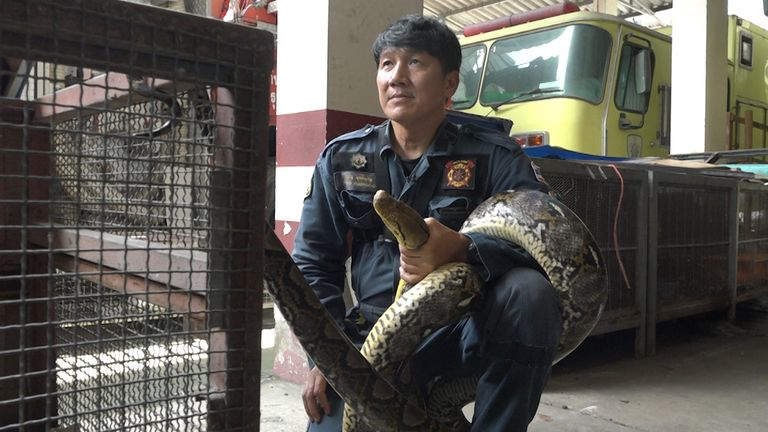 Pinyo Pukpinyo, Bangkok's snake catcher
