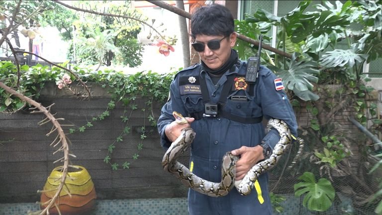 Pinyo Pukpinyo holds one of the snakes he has caught