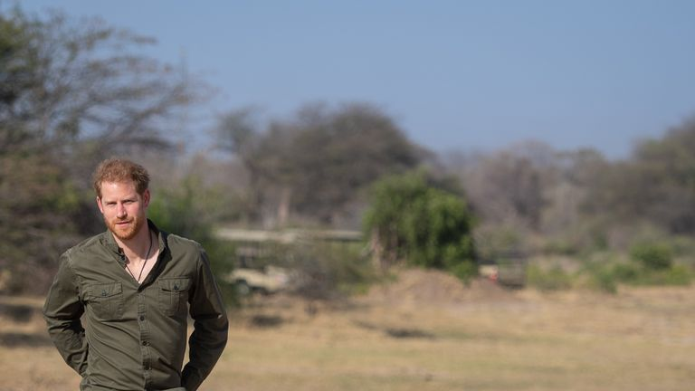 Prince Harry says conservation is 'fundamental to our survival'