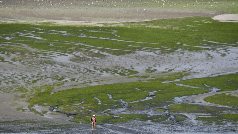 A woman walks on Grandville beach covered with toxic green algae