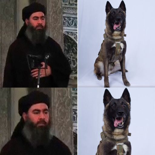Abu Bakr al Baghdadi death: Picture of dog in raid declassified but name stays top secret