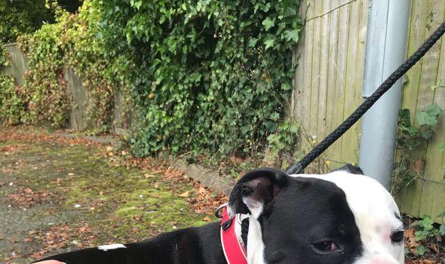 CCTV captures man abandoning 'terrified' dog outside care home