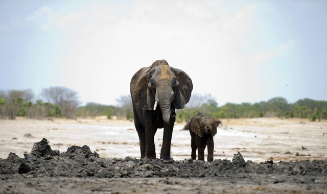 55 elephants starve to death in Zimbabwe after drought