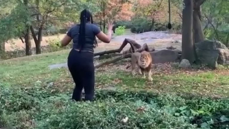 The Bronx Zoo says the woman who trespassed inside its lion enclosure put herself in serious danger