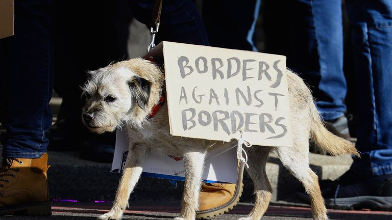 A dog on the march. Pic: Vickie Flores/EPA-EFE/Shutterstock
