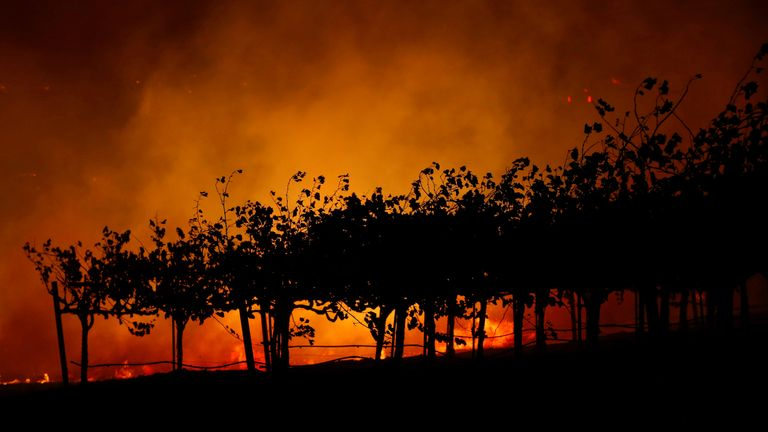 Northern California's famous vineyards are at risk