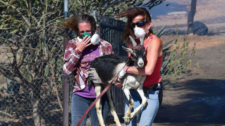 Robyn Phipps (L) and Laura Horvitz help rescue a goat from a ranch in Simi Valley