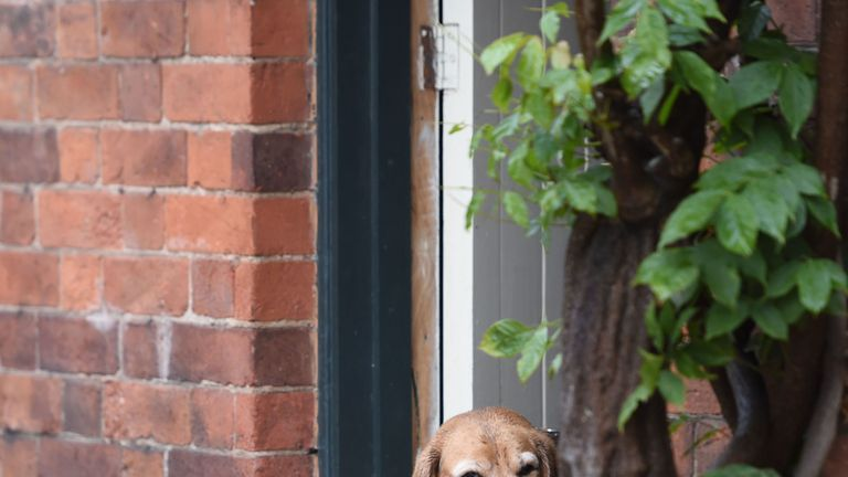 A beagle was seen poking her head round the door in flooded Cossington, Leicester, earlier Flooding in Cossington, Leicester. Beagle, Lady, views the floodwater outside the front door with deep suspicion. Torrential thunderstorms and the village's proximity to the River Soar has seen parts of the village flooded. PA Photo. Picture date: Tuesday October 1, 2019. See PA story WEATHER  Rain. Photo credit should read: Joe Giddens/PA Wire