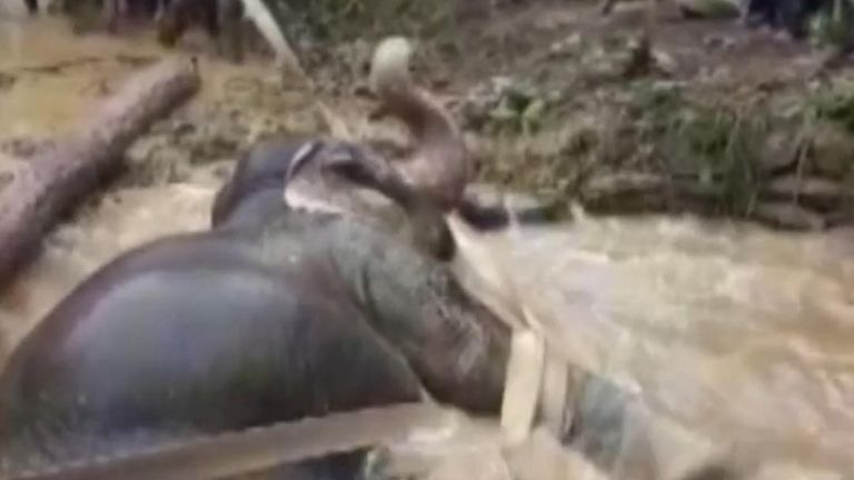 A female elephant stuck in a swamp in India was rescued by the locals.