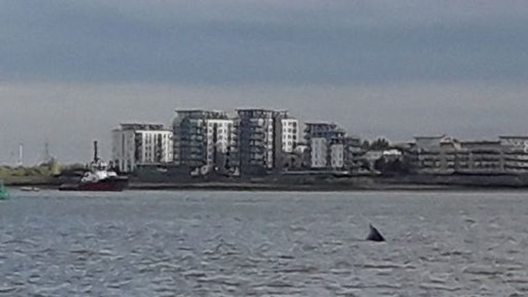 A humpback whale has been spotted in the Thames