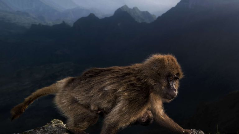 Pic: Riccardo Marchegiani/Wildlife Photographer of the Year