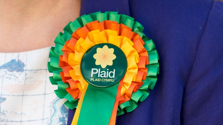 RHONDDA, WALES - APRIL 06: A rosette worn by Plaid Cymru leader Leanne Wood as she campaigns in Ton Pentre on April 6, 2015 in Rhondda, Wales. Britain goes to the polls in a general election on May 7.  (Photo by Matthew Horwood/Getty Images)