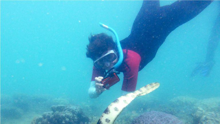 Fantastic grandmother Monique Mazière photographing sea snake number 79, nicknamed Déborah. Pic: Claire Goiran/UNC