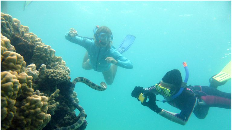 Two of the grandmother dive team around a greater sea snake Hydrophis major, photographing the snake's tail for identification. Pic: Claire Goiran.