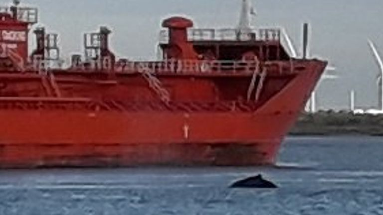 The whale spotted in the Thames over the weekend. Pic: Richard Banner