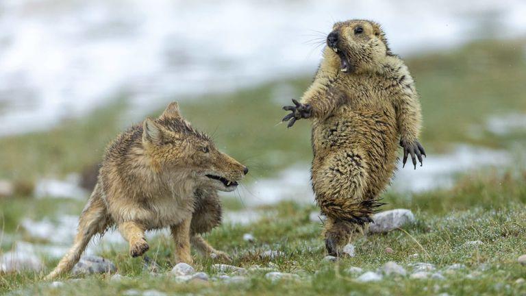 Pic: Yongqing Bao/Wildlife Photographer of the Year