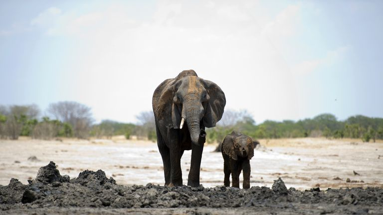 The drought forces elephants to stray into nearby communities. File pic.