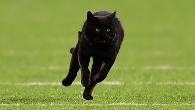 Black cat interrupts Cowboys-Giants game
