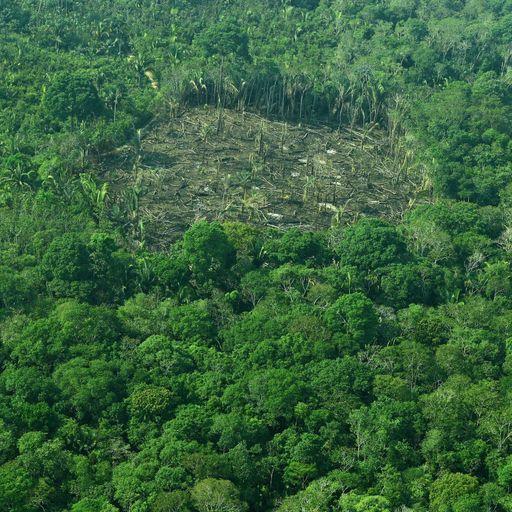 Brazil's rainforest is back under attack