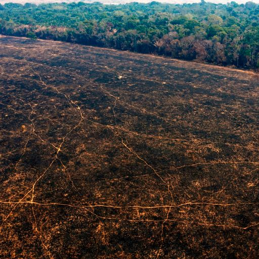 Brazil's Amazon deforestation at highest rate in 11 years, country's space agency says