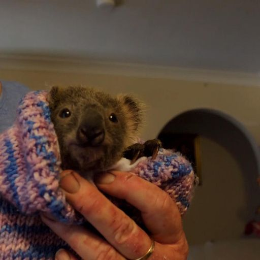 Australia bushfires: Meet the koalas lucky to be alive after devastating blazes