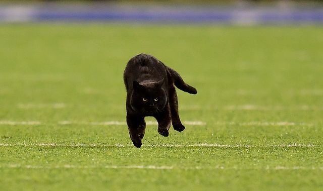 NFL: Black cat that stormed football pitch in the US is still on the run