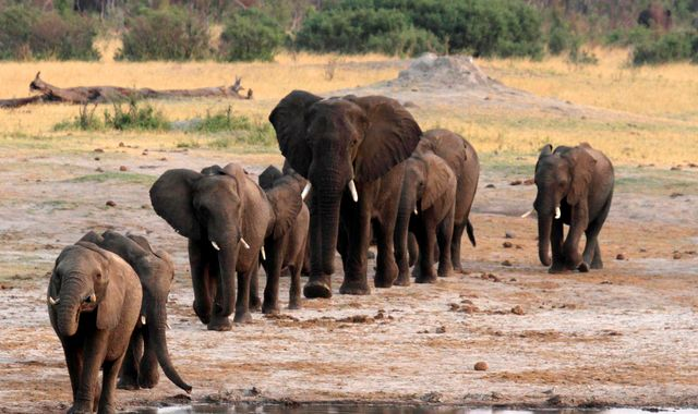 Hundreds of elephants die in Zimbabwe during severe drought
