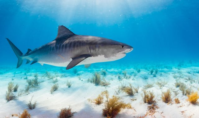 Hand of missing Scottish tourist found in shark's stomach
