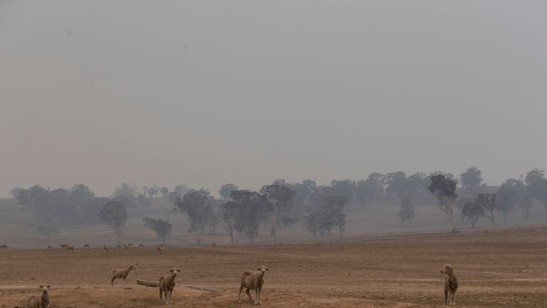 Smoke engulfs the landscape around Torrington in New South Wales