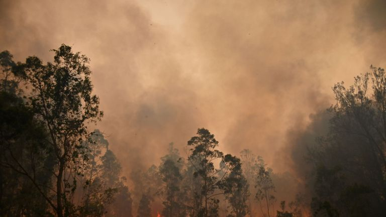 Wildfires have been sweeping across New South Wales