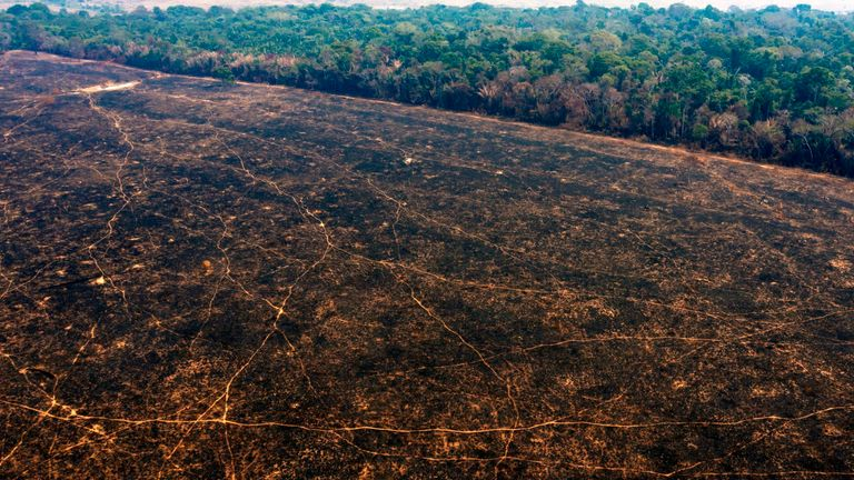 The Amazon rainforest, near Porto Velho in Brazil, one of the areas affected by fire over the summer