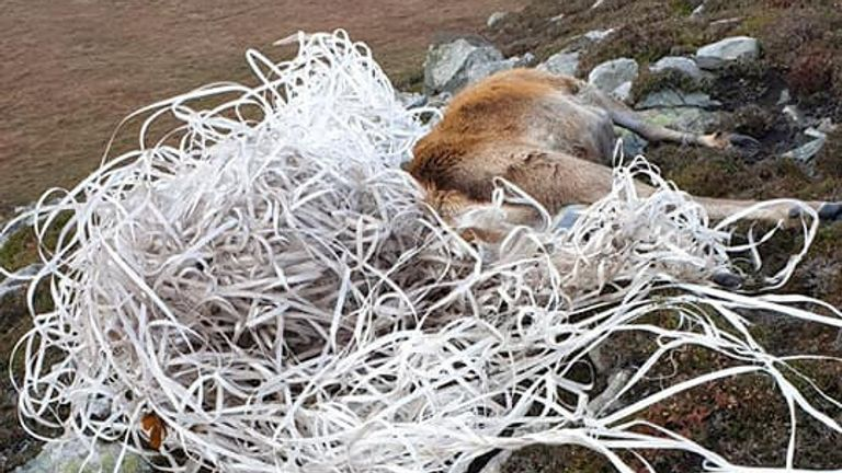 The stag was discovered tangled in plastic waste on a hillside on the west coast of Jura, Inner Hebrides. Pic: Wild Side of Jura /SWNS