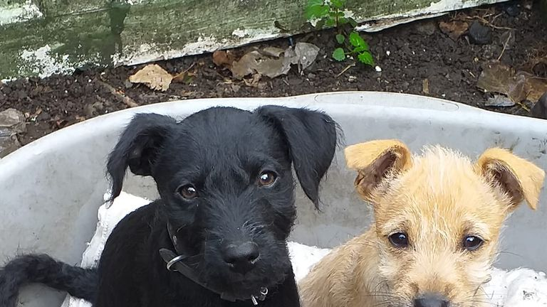 The puppy's owner has called for more restrictions on fireworks. Pic: Susan Paterson/Facebook