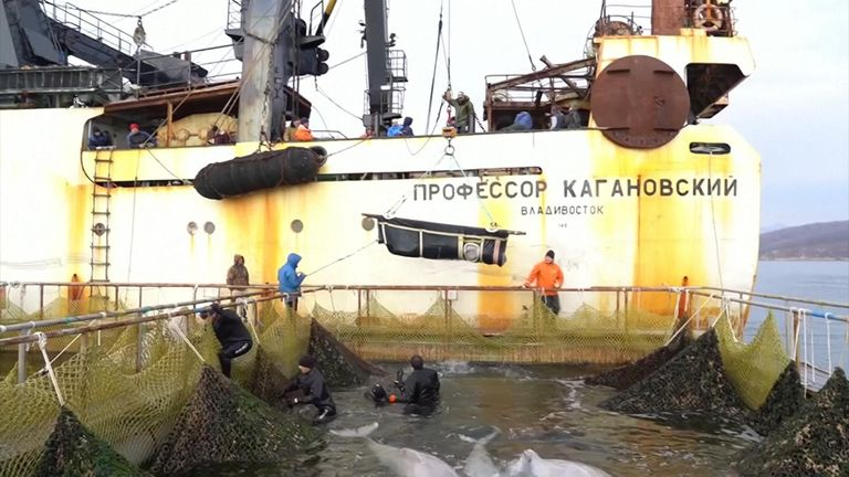 Russia says it has completed its operation to release the last of the captured whales into the wild