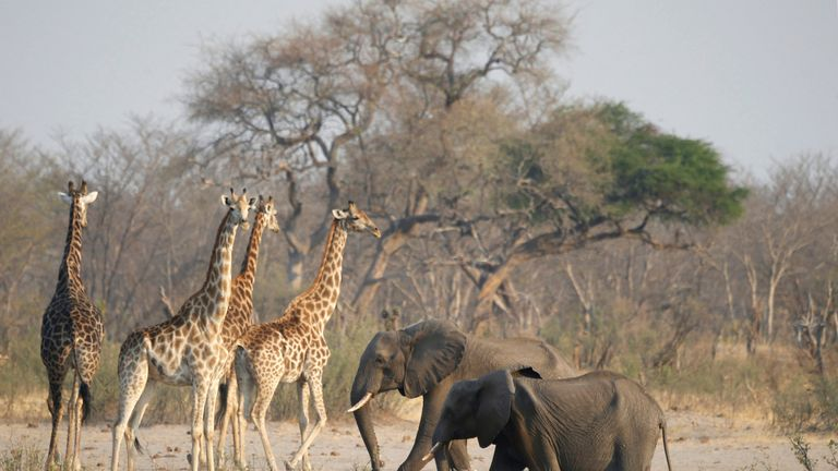 All animals in Zimbabwe's parks have been affected by the drought