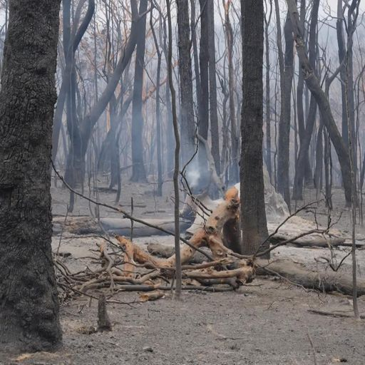 Australia bushfires: 'A charred, moon-like landscape everywhere'