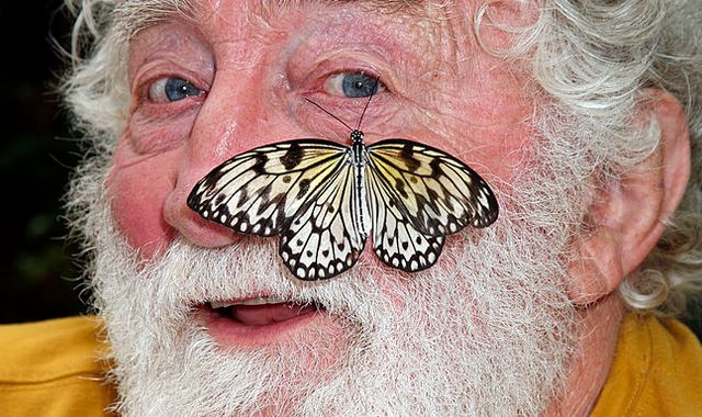 David Bellamy: Naturalist and broadcaster dies age 86