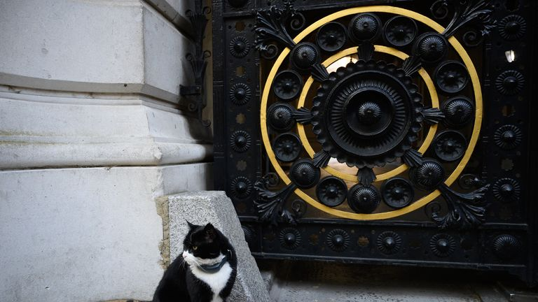 LONDON, ENGLAND - MAY 24: Palmerston, the Foreign Office cat sits on the pavement before Prime Minister Theresa May makes a statement outside 10 Downing Street on May 24, 2019 in London, England. The prime minister has announced that she will resign on Friday, June 7, 2019. (Photo by Leon Neal/Getty Images) (Photo by Leon Neal/Getty Images)