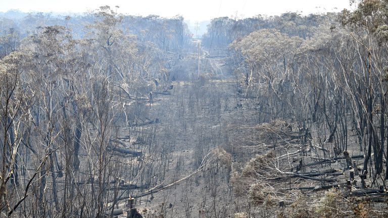 A view of the landscape with burnt trees after a bushfire in Mount Weison in Blue Mountains, some 120 kilometres northwest of Sydney on December 18, 2019. - Australia this week experienced its hottest day on record and the heatwave is expected to worsen, exacerbating an already unprecedented bushfire season, authorities said on December 18. (Photo by Saeed KHAN / AFP) (Photo by SAEED KHAN/AFP via Getty Images)