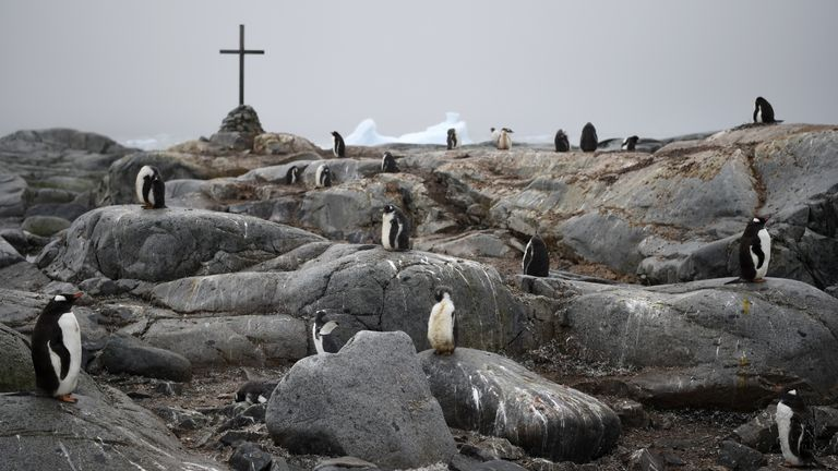 Adelie and Gentoo penguins next to a memorial to three British Antarctic Survey staff who went missing