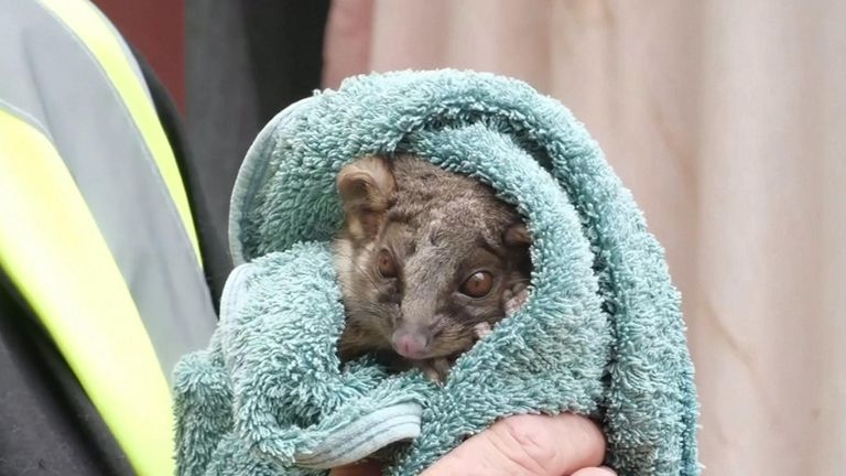 The bushfires have been devastating for Australia's wildlife