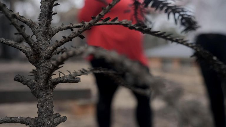 Still from Katerina Vittozzi's VT. It features Evonne Balcar talking about how a tree she planted with her son when he had cancer before he died has been destroyed in the Australian fires