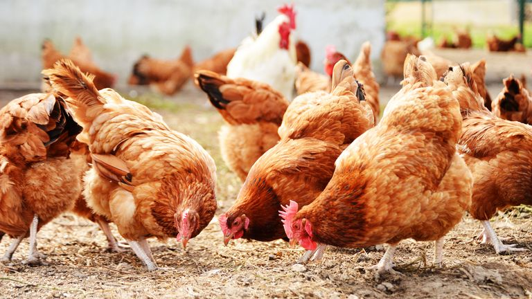 All 27,000 chickens at the Suffolk farm will be culled, Defra said
