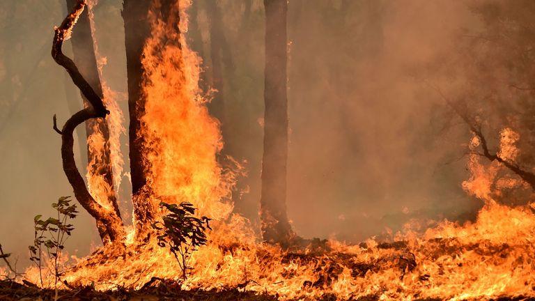 Bushfire in Balmoral