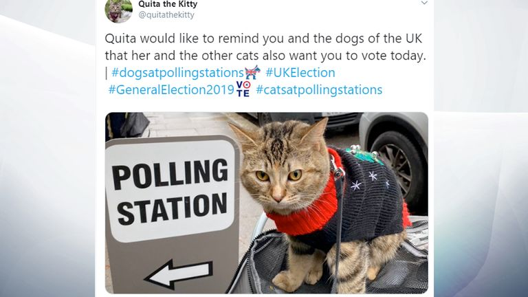 Feline political? Make sure you vote. Pic: @quitathekitty